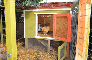 Backyard chicken zone - chicken coop 2