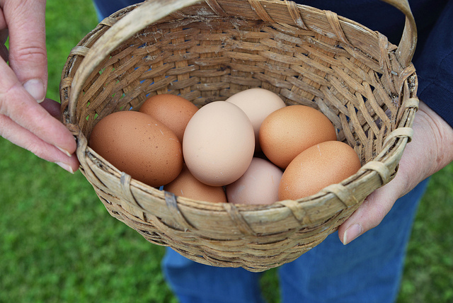 Basket of eggs Medium