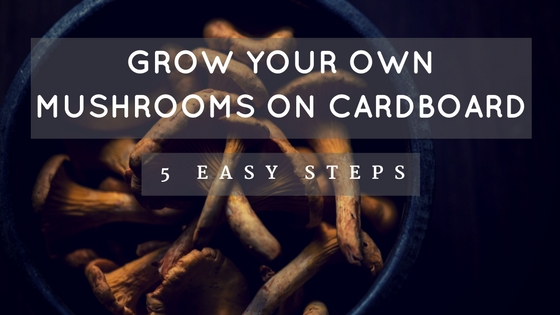 How to Grow Oyster Mushrooms on Cardboard at Home in 5 Easy Steps