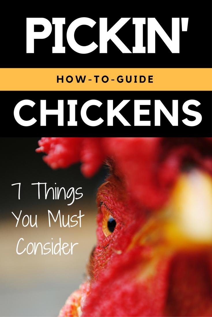 the best backyard chicken breeds backyard chicken zone