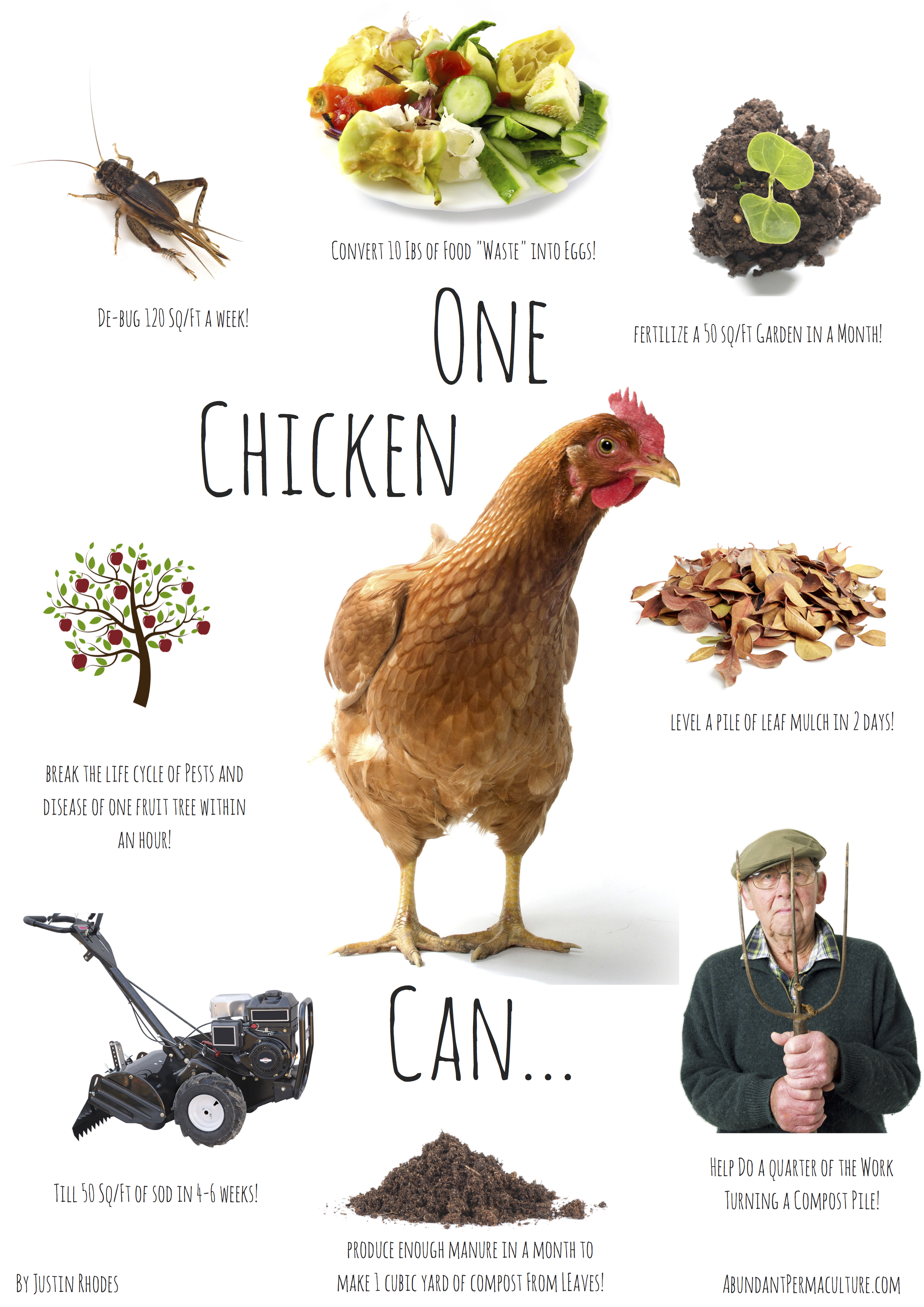Backyard Chickens – The Power of One | Backyard Chicken Zone