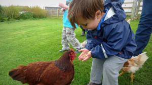 backyard chicken zone - boy feeding chicken