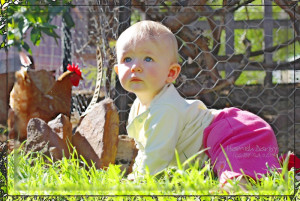 backyard chicken zone - infant crawling with chickens
