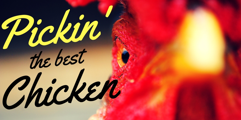 Selecting the Best Backyard Chicken Breed